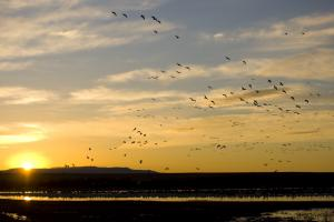 Sunrise - Bosque Del Apache