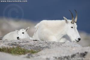 Morning Slumber - Mountain Goats
