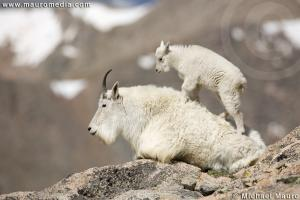 Learning To Climb - Mountain Goat